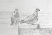 dessin animaux tourterelles dessin couple : Parade amoureuse d'un couple de tourterelles