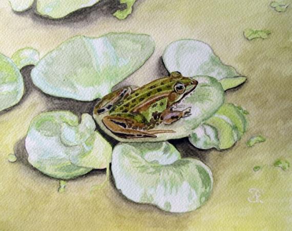 TABLEAU PEINTURE grenouille vert aquarelle plante Animaux Aquarelle  - Grenouille sur plante flottante
