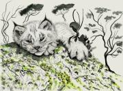 tableau animaux lynx animal disparition europe : Jeune lynx