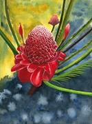 tableau fleurs rose amazonie sauvage zoom : Rose d'Amazonie