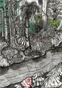Découverte de l'Amazonie