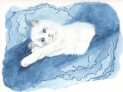 tableau animaux chaton enfant bleu figuratif : Chaton Ragdoll