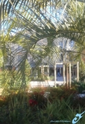 photo paysages arcades feuilles palmiers alpesmaritimes : ARCADES DE PALMES