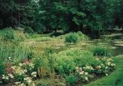 photo paysages vincennes lac nenuphares fleurs : UN JOUR A VINCENNES