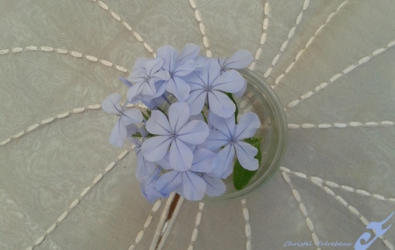PHOTOGRAPHY PLUMBAGO DENTELAIRE DU CAP FLEURS Fleurs  - PLUMBAGO DU CAP