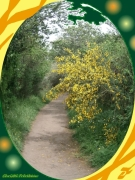 mixte paysages chemin genets normandie verdure : CHEMIN SOLAIRE