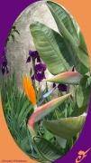 mixte fleurs oiseaux de paradis fleurs strelitzia : OISEAUX DE PARADIS