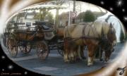mixte animaux chevaux de trait charette attelage marche de noel : CHEVAUX DE TRAIT