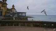 photo paysages goelands oiseaux marins granville normandie : RENDEZ-VOUS