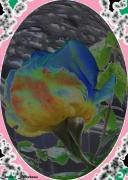 mixte fleurs rose ameilland gloriapeace instant magique : INSTANT MAGIQUE