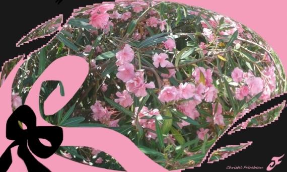 MIXTE FLEURS LAURIER-ROSE ARBUSTE MEDITERRANEE Fleurs  - FLEURS DE LAURIER-ROSE