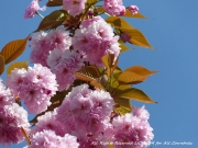 photo fleurs fleurs roses pink flowers lichelm photos : FLEURS ROSES