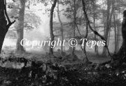 photo paysages bois noir et blanc brouillard paysage : Les bois perdus