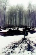 photo paysages arbres hiver foret : Désolation