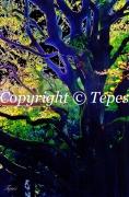 photo paysages arbre couleur colore : L'arbre aux milles teintes