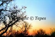 photo paysages paysage arbres crepuscule pastel : Pastel