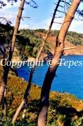 photo paysages nature arbres paysage eau : Tranquillité