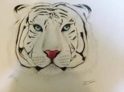 dessin animaux dessin animaux tigre blanc : Tigre blanc