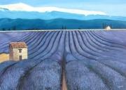 tableau paysages lavande mont ventoux violet cabane : champs de lavande avec Ventoux