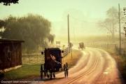 photo scene de genre amish pennsylvanie buggy usa : Amish - Pennsylvanie