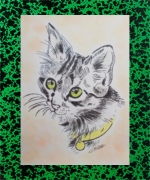 dessin animaux animaux chat : chat
