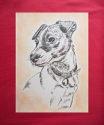 dessin animaux animaux chiens jack russel : jack russel