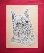 dessin animaux animaux chiens griffon bruxellois : griffon bruxellois