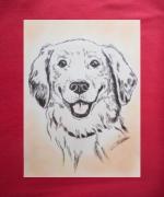 dessin animaux animaux chiens golden : golden