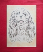 dessin animaux animaux chiens cavalier king charle : cavalier king charles
