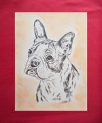 dessin animaux animaux chiens boston terrier : boston terrier