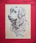 dessin animaux animaux chiens golden retriever : golden retriever