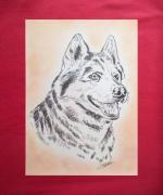 dessin animaux animaux chiens husky siberien : husky sibérien