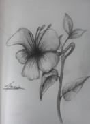 dessin fleurs : Fleur