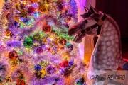 photo animaux couleurs lumieres chevaux de bois : Regard émerveillé