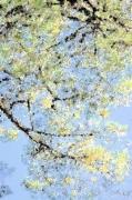 autres fleurs arbre ciel : Arbre en ciel