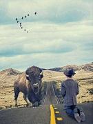 art numerique animaux bison route personne : Buffalo