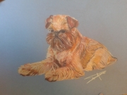 tableau animaux chien griffon bruxellois : griffon bruxellois