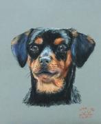dessin animaux portrait de chien chien pastel : Milice ...à quatre pattes !