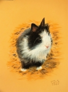 dessin animaux lapin nain tendresse : bébé lapin nain