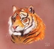 dessin animaux tigre felin majestueux : mon félin préféré