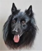 dessin animaux portrait de chien groenendael : Alto