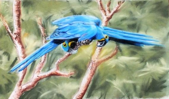 DESSIN ara oiseaux pastel Animaux Pastel  - On discute ?