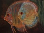 dessin animaux discus poissons tropicaux poissons pastel : Discus
