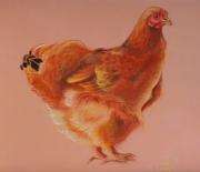 dessin animaux poule bantam de pekin pekin portrait de poule : Bantam de Pékin