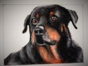 dessin animaux rottweiler chien portrait d anim : Femelle rottweiler