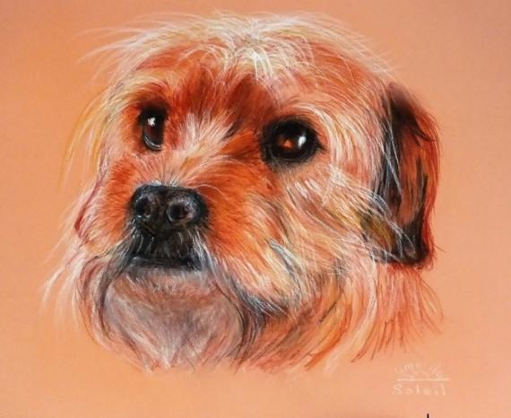 DESSIN chien tendresse regard Animaux  - Un amour de chien