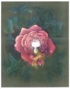 tableau fleurs rose epanouie eclosion jeune vierge nue sensualite : La rose