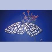mixte animaux papillon butterfly flower : Papillon