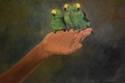tableau animaux tableau peinture ani peinture ,a l hu sur toile joky kamo : tableau peinture animaux girafe oiseaux perruches