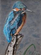 tableau animaux martin pecheur oiseau marais bleu : martin-pecheur au repos